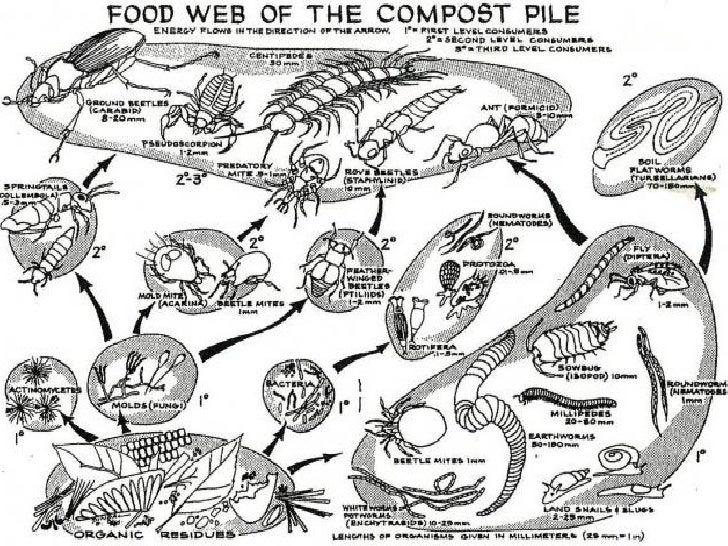 Quot Composting 101 Quot Presentation
