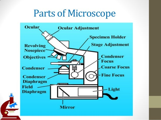 parts and function of microscope You will first get acquainted with the major parts of the compound light microscope before learning the proper way to use it.