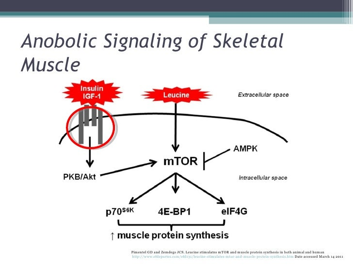 whey protein vs anabolic