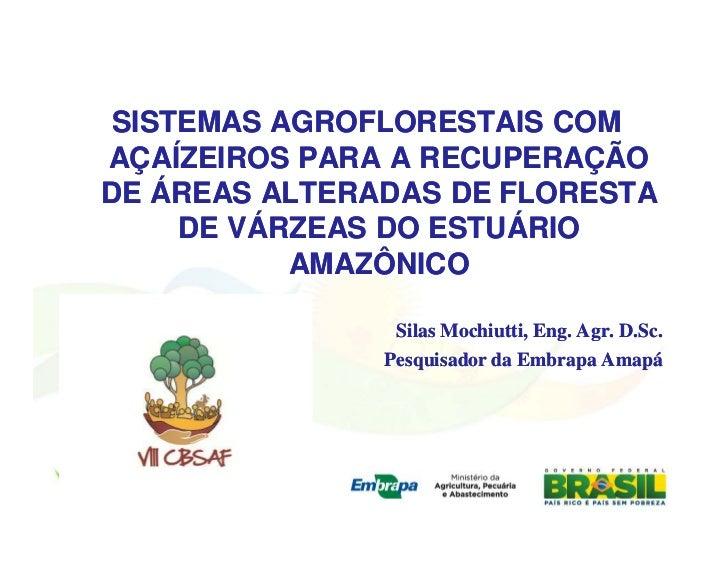 SISTEMAS AGROFLORESTAIS COMAÇAÍZEIROS PARA A RECUPERAÇÃODE ÁREAS ALTERADAS DE FLORESTA     DE VÁRZEAS DO ESTUÁRIO         ...