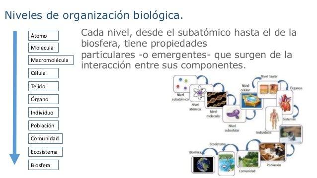Compuestos inorg nicos concepto de la vida for Molecula definicion