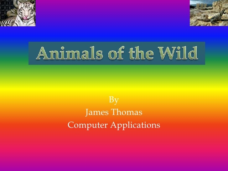 Animals of the Wild <br />By<br />James Thomas<br />Computer Applications<br />