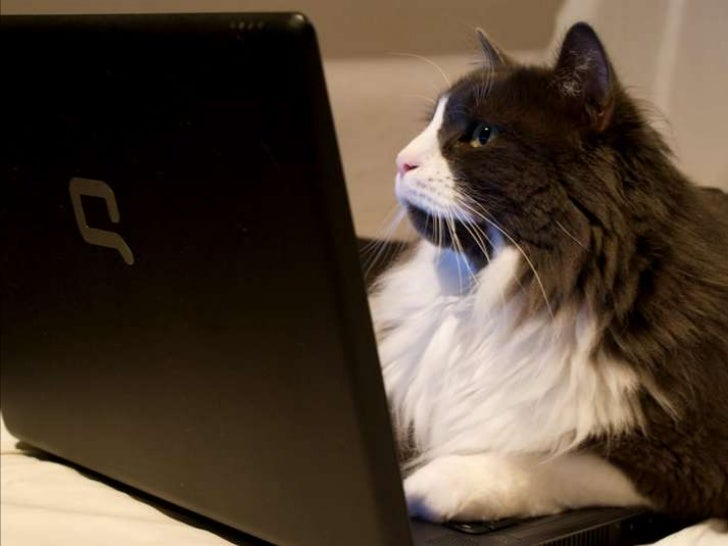 COMPUTER  CATS