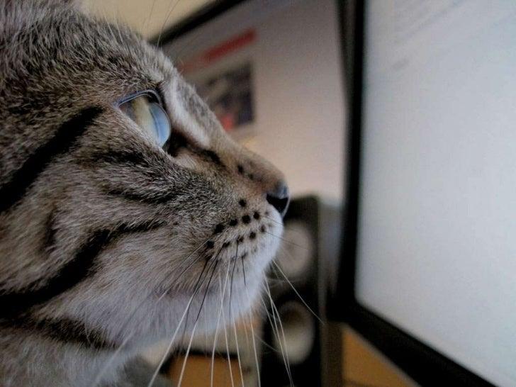 COMPUTER  CATS   Slide 3