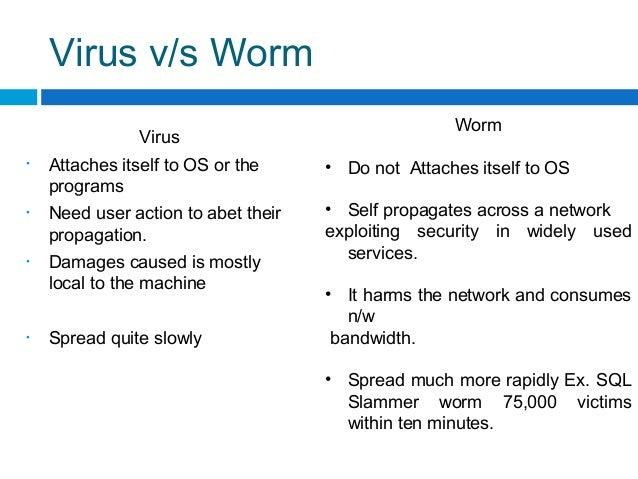 computer virus vs worm Computer Worms