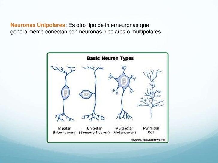 Comunicacin neuronal