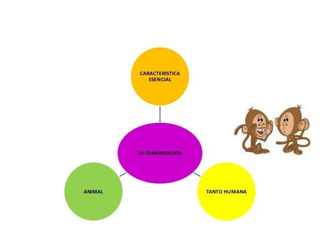 CARACTERISTICA            ESENCIAL         LA COMUNICACIONANIMAL                     TANTO HUMANA