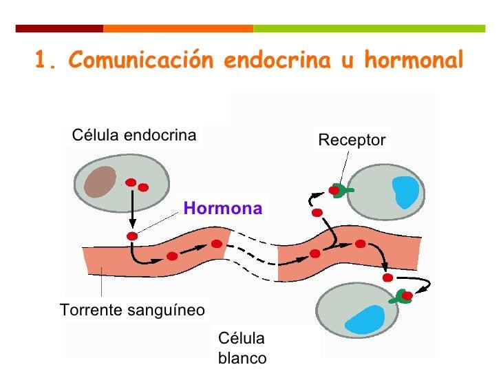 hormonas esteroides sinteticas