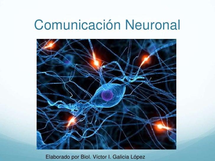 Comunicación Neuronal<br />Elaborado por Biol. Víctor I. Galicia López<br />