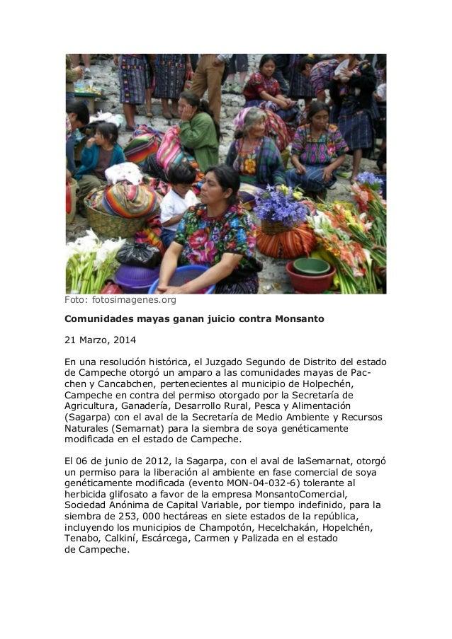 Foto: fotosimagenes.org Comunidades mayas ganan juicio contra Monsanto 21 Marzo, 2014 En una resolución histórica, el Juzg...