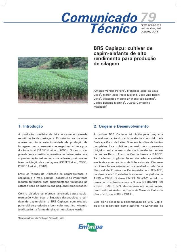 BRS Capiaçu: cultivar de capim-elefante de alto rendimento para produção de silagem Antonio Vander Pereira1 , Francisco Jo...