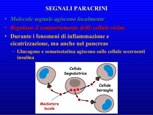 • NeurotrasmettitoreNeurotrasmettitore – Tipo specifico di segnalesegnale paracrinoparacrino – Sinapsi nervo-cellula • Neu...