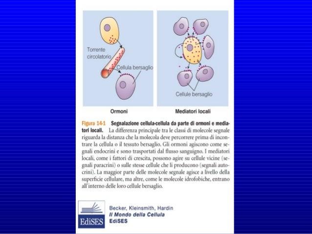 • Proteine • Peptidi • Amminoacidi • Nucleotidi • Steroidi • Derivati degli Acidi Grassi • Gas disciolti DI COSA SONO FATT...