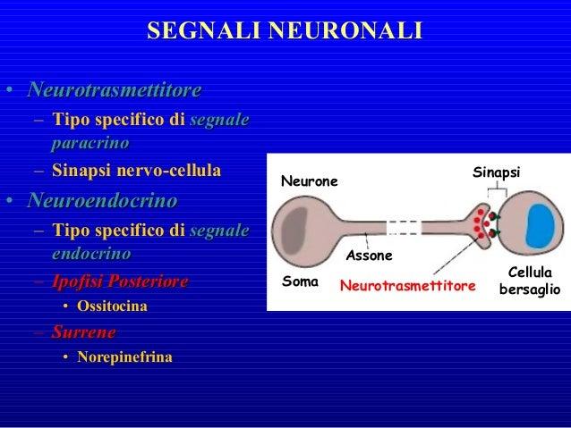 • Ormoni SteroideiOrmoni Steroidei – Derivati dal colesterolo – Legano recettori intra- cellulari – Molecole non-polari – ...