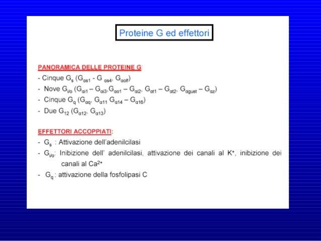 AMP CICLICO CALCIO La fosfolipasi attivata taglia PI(4,5)P2 generando due prodotti: inositolo 1,4,5-trifosfato (IP3) e dia...