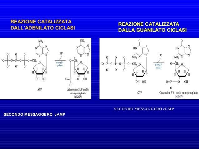 Le proteine G sono bersagli di alcune tossine importanti dal punto di vista medico. La tossina colerica, prodotta dal batt...
