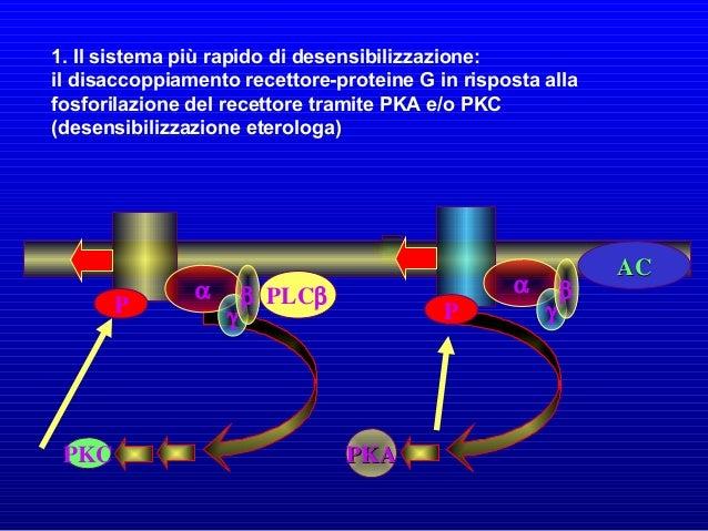 Un esempio di recettori enzimatici è rappresentato dai recettori tirosin chinasici (RTK), presenti sulla membrana nella fo...