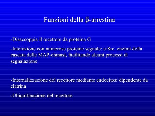 L'ATTIVAZIONE DI RAS PORTA ALL'ATTIVAZIONE DELLA VIA MAP CHINASICA (Mitogen Activated Protein Kinases)