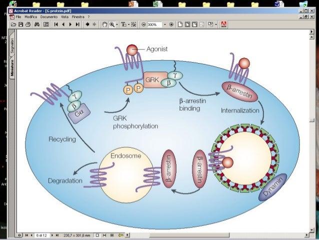 Chinasi a cascataChinasi a cascata ras raf raf Mek1 Erk1 ras Mek1 ATP Erk1 GTP GDP Nucleo P P ATP ADP Erk1ATP ADP ADP P P ...