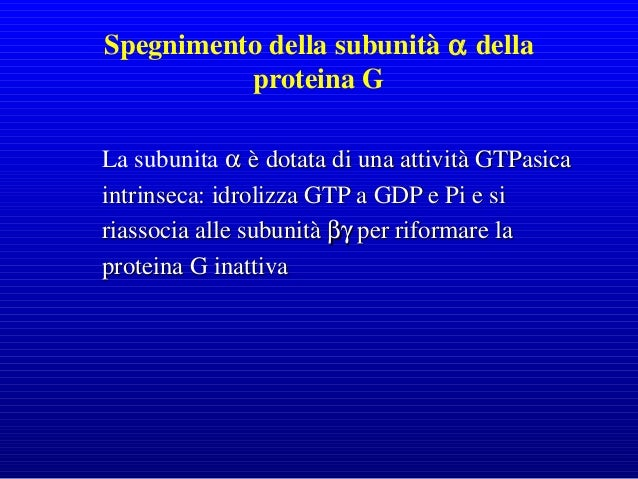 Oltre a Grb2 altre proteine come PI3K e fosfolipasi C presentano i domini SH e possono legarsi a recettori tirosin chinasi...