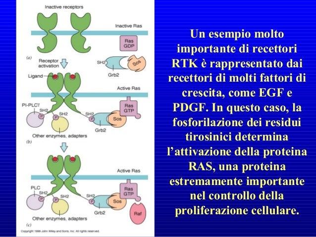 Impiego di composti che si degradano in ossido nitrico per il trattamento dell'angina