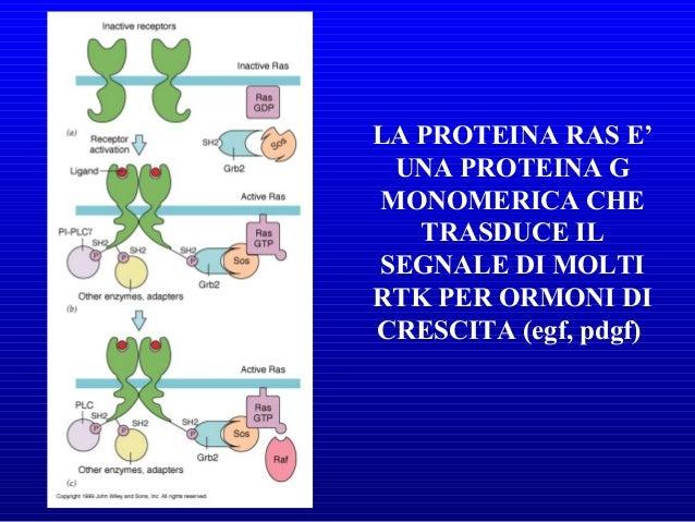 • Molecole segnale contenenti lipidi • Legano recettori sulla superficie cellulare • Effetto AutocrinoAutocrino e Paracrin...