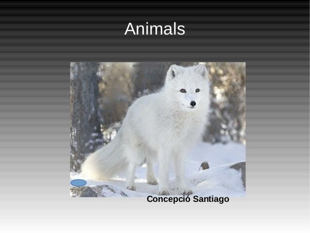 Animals Concepció Santiago