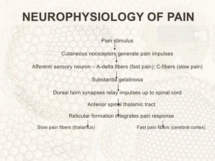 NEUROPHYSIOLOGY OF PAIN PDF