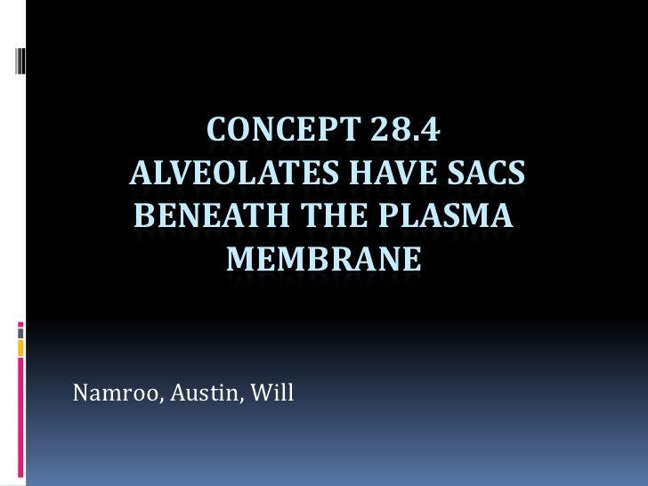 CONCEPT 28.4     ALVEOLATES HAVE SACS     BENEATH THE PLASMA          MEMBRANENamroo, Austin, Will