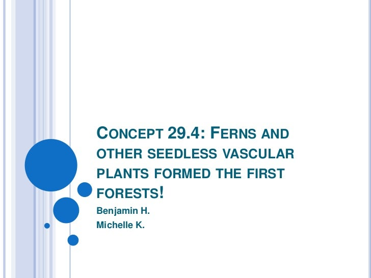 CONCEPT 29.4: FERNS ANDOTHER SEEDLESS VASCULARPLANTS FORMED THE FIRSTFORESTS!Benjamin H.Michelle K.