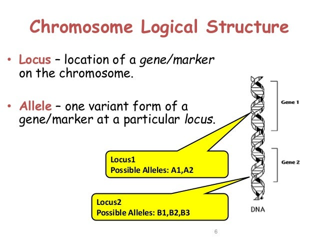 genotype example
