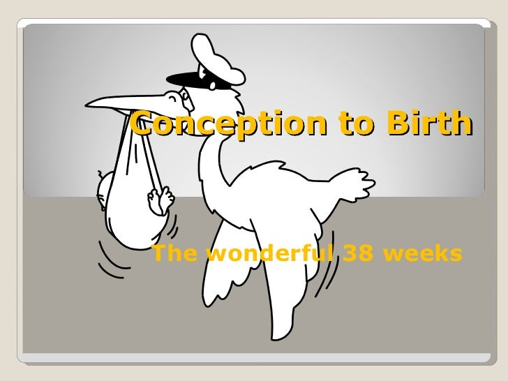 Conception to Birth The wonderful 38 weeks