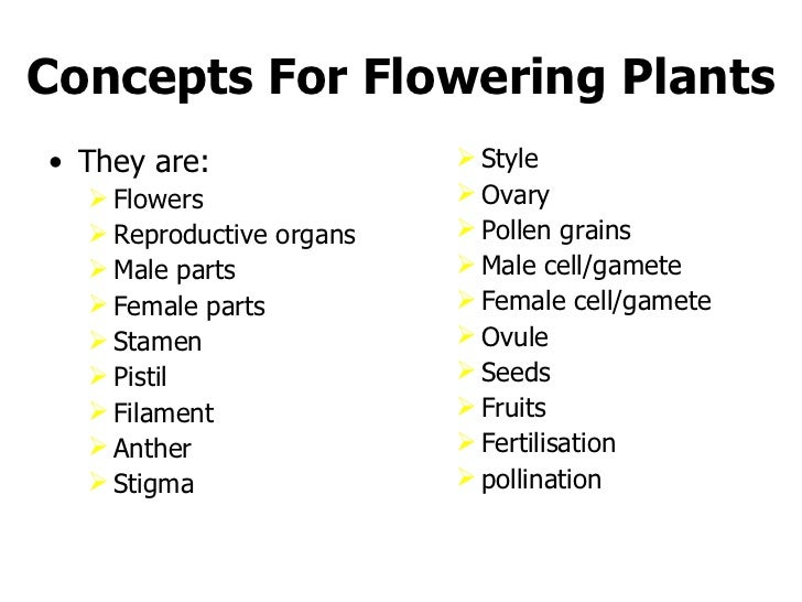 Flower Concept Map.Conceptmap