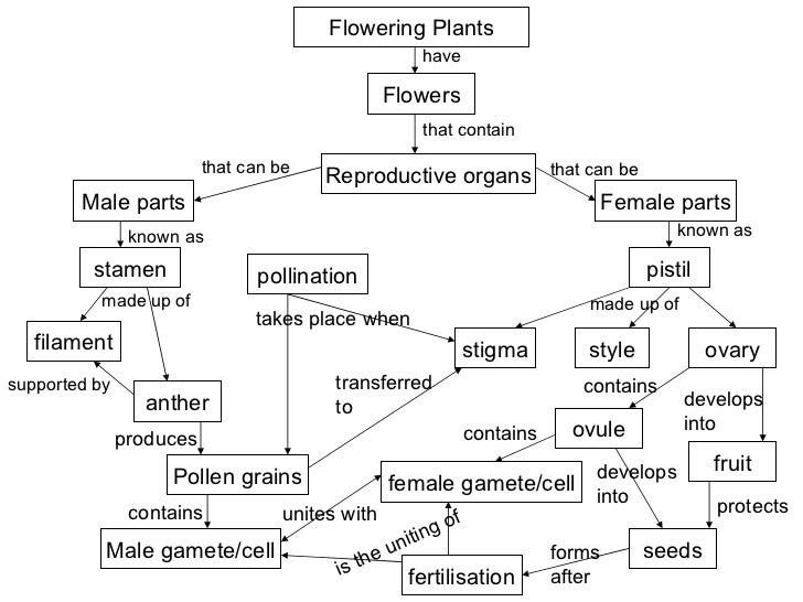 relationship between micropyles and pollen grains are produced
