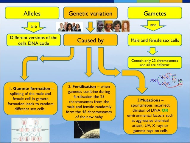 Concept map for genetic variation