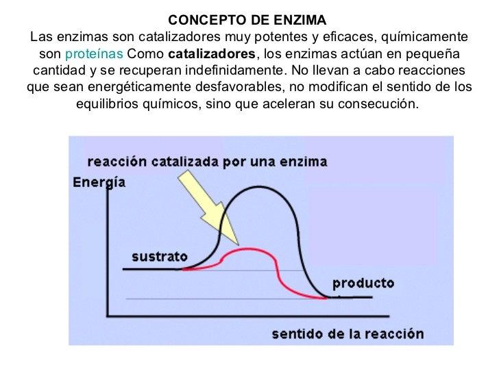 Concepto De Enzima