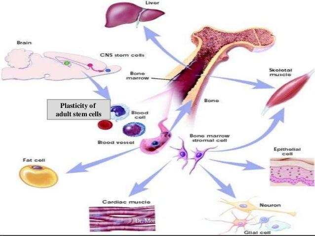 Adult Stem Cell Plasticity 100