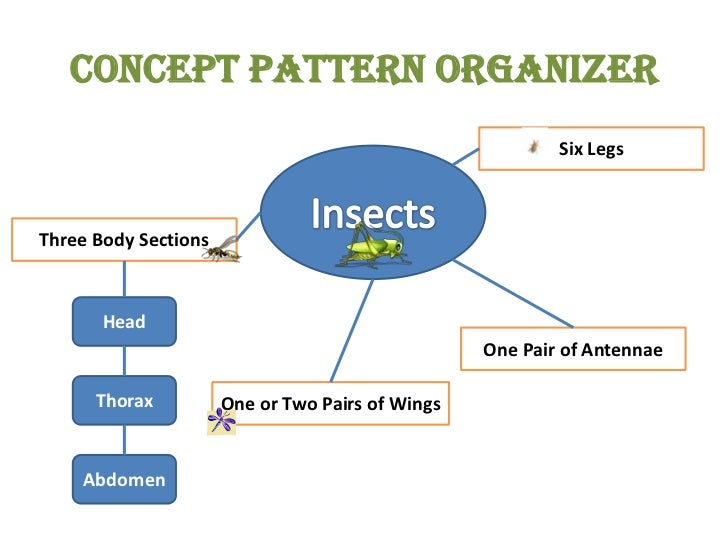 Concept Pattern Organizer<br />Six Legs<br />Insects<br />Three Body Sections<br />Head<br />One Pair of Antennae<br />Tho...