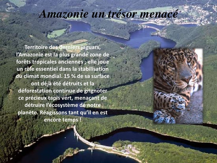 Amazonie un trésor menacé<br />Territoire des derniers jaguars, l'Amazonie est la plus grande zone de forêts tropicales an...