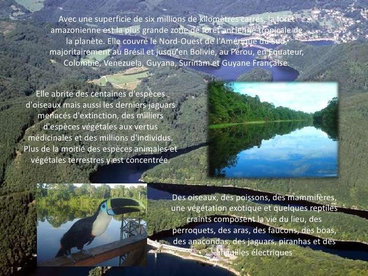 Avec une superficie de six millions de kilomètres carrés, la forêt amazonienne est la plus grande zone de forêt ancienne t...