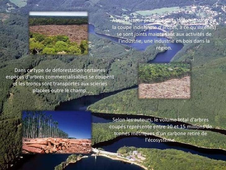 Autre facteur principal de la déforestation est la coupe indistincte d'arbres, à ce qu'ils(elles) se sont joints maintenan...