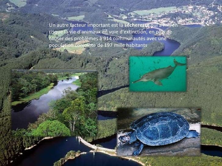 Un autre facteur important est la sécheresse qui a mis en risque la vie d'animaux en voie d'extinction, en plus de causer ...