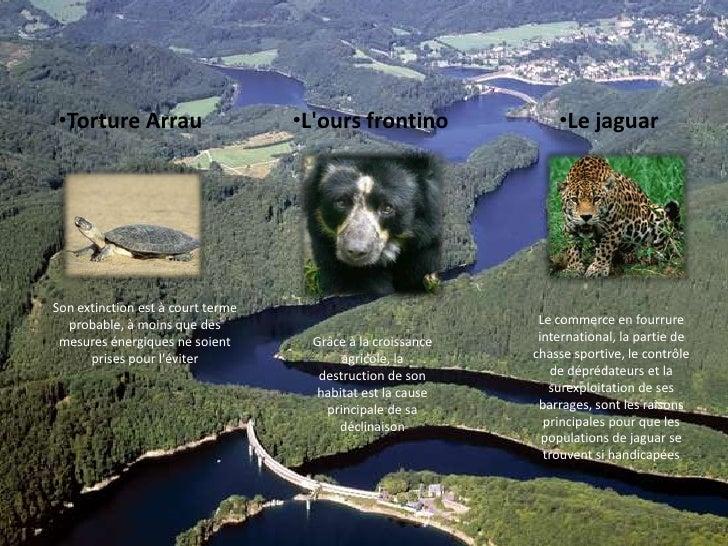 <ul><li>Torture Arrau