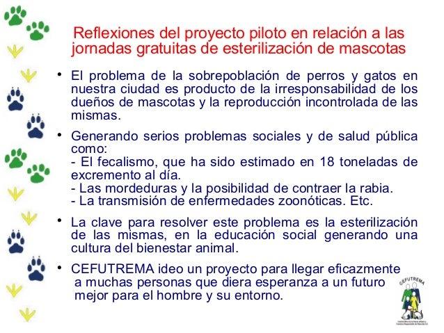 Reflexiones del proyecto piloto en relación a lasjornadas gratuitas de esterilización de mascotasEl problema de la sobrep...