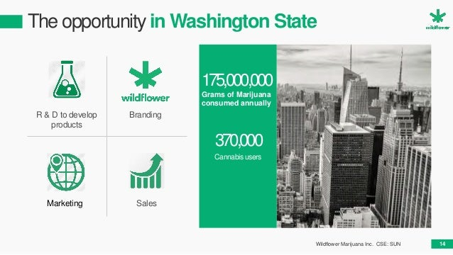 The opportunity in Washington State Marketing R & D to develop products Branding Sales 175,000,000 Grams of Marijuana cons...