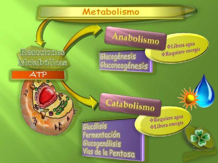 sugerencias de gran alcance en metabolismo insulina