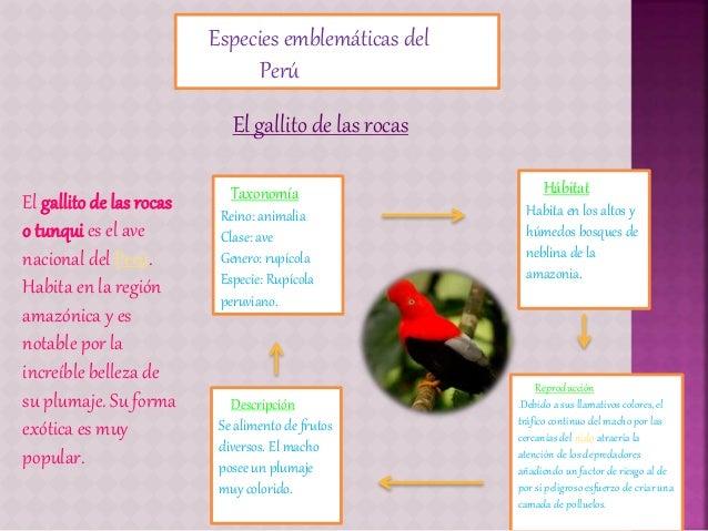 Especies emblemáticas del Perú El gallito de las rocas o tunqui es el ave nacional del Perú. Habita en la región amazónica...