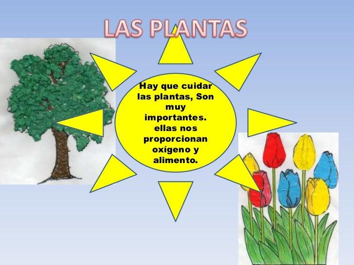Como cuidamos el medio ambiente - Como cuidar las hortensias de exterior ...