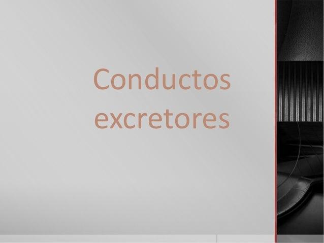 Conductos excretores
