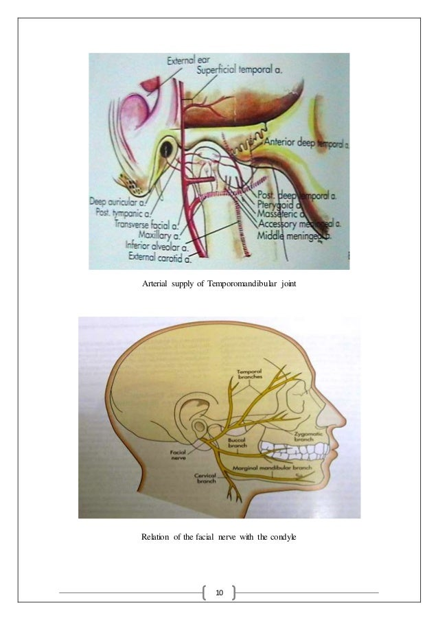 10 Arterial supply of Temporomandibular joint Relation of the facial nerve with the condyle